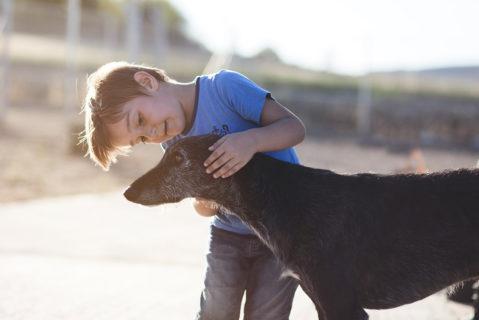 Ein Schulhund muss friedlich und sehr belastbar sein.