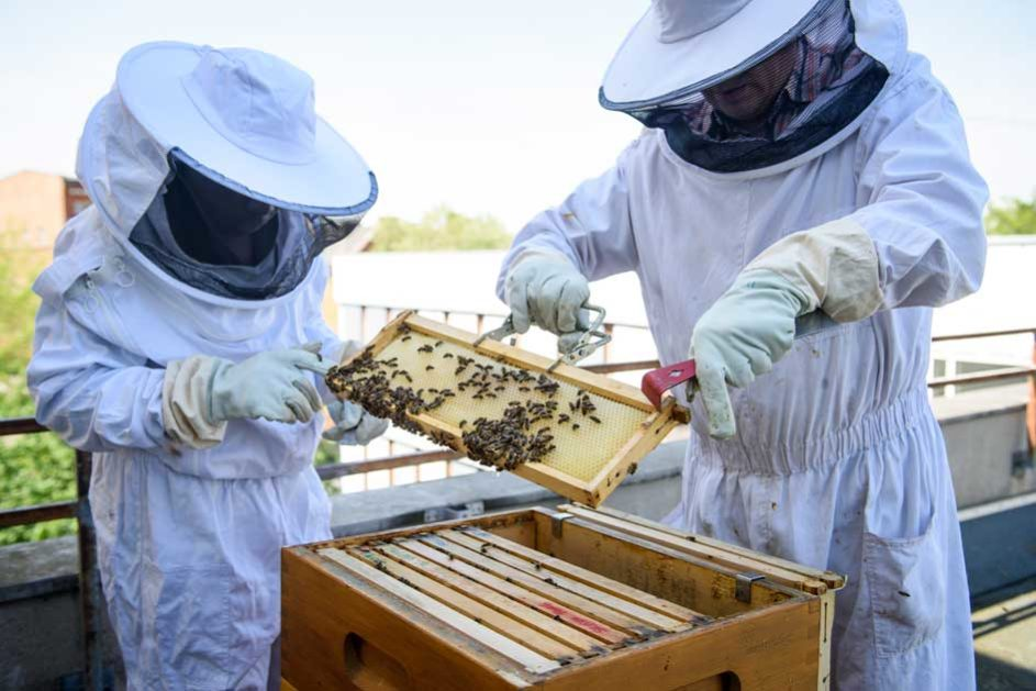 Imker während der Arbeit mit Honigbienen