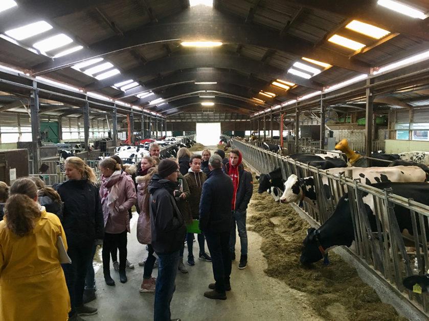 Mehrere Schülerinnen und Schüler stehen in einem Kuhstall