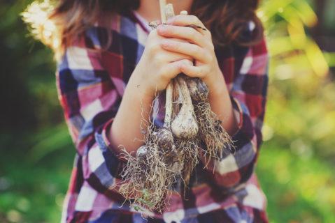 Ein Mädchen hält Knoblauchzehen in der Hand