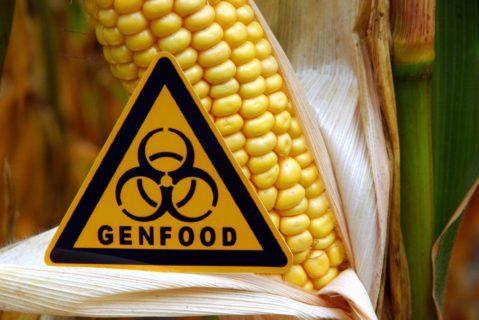 Gentechnik ist unnötig und ein Werkzeug der bösen Agrar-Industrie - so die unterschwellige Botschaft in den Lehrmaterialien von keine-gentechnik.de.