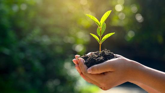 Pflanze Erde Hand als Symbol für Erträge von Bildung
